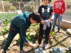 Alumnos distribuyendo insectos beneficiosos