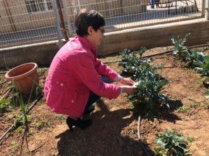 La directora distribuyendo insectos auxiliares