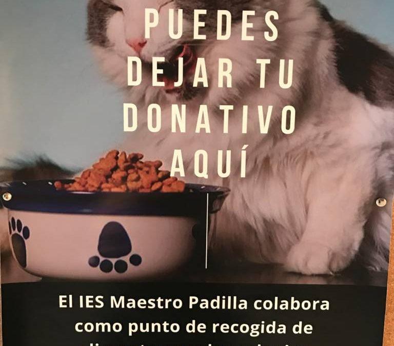 Recogida de alimentos para los gatos de las colonias felinas de Almería